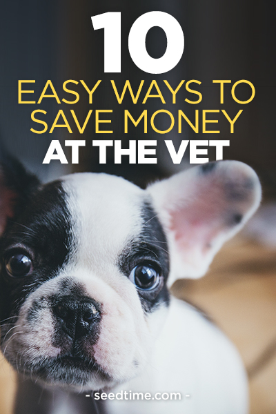 Ways you can save money at the vet to take good care of your pets